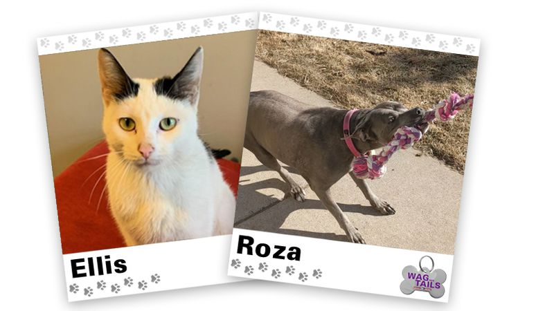 WAGNER TAILS: Ellis and Roza