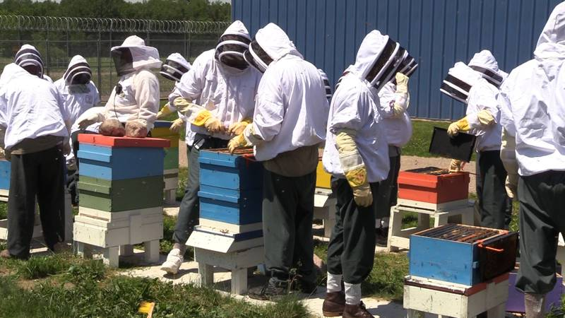 Inmates at Stanley Correctional Institution tend to hives of honeybees.