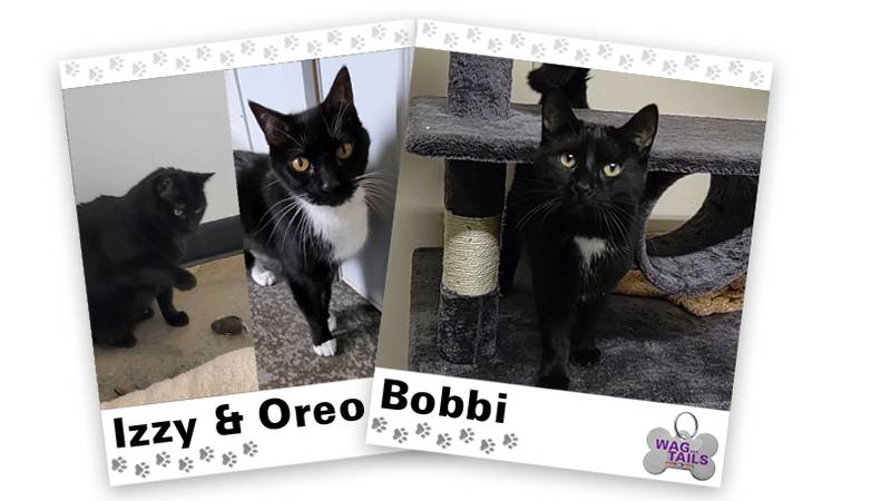 WAGNER TAILS: Izzy & Oreo and Bobbi